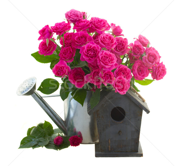 pink rose  flowers with birdhouse Stock photo © neirfy