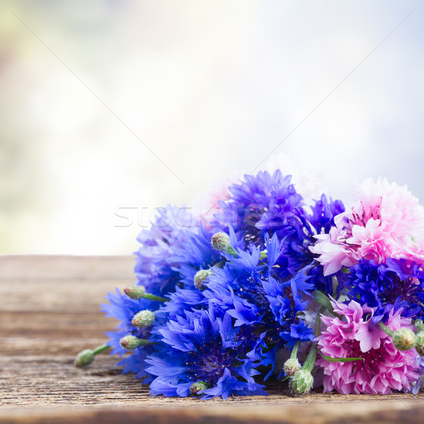 Blue cornflowers Stock photo © neirfy