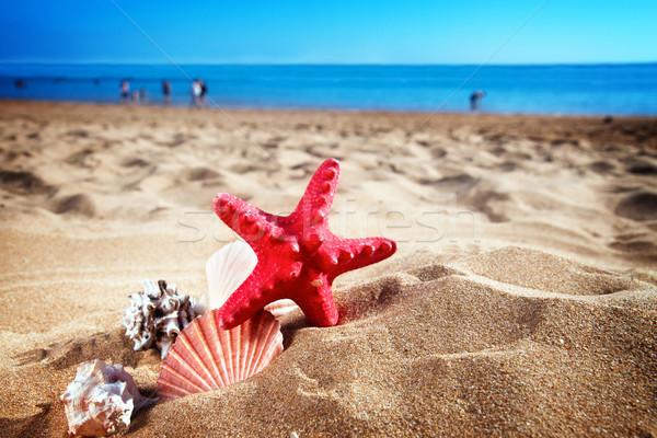 Starfish conchiglie mare shore frame spiaggia di sabbia Foto d'archivio © neirfy