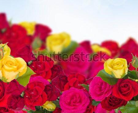 Ffesh Flowers Background Stock photo © neirfy