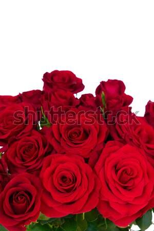 Stockfoto: Rood · rozen · boeket · donkere · Rood · rose