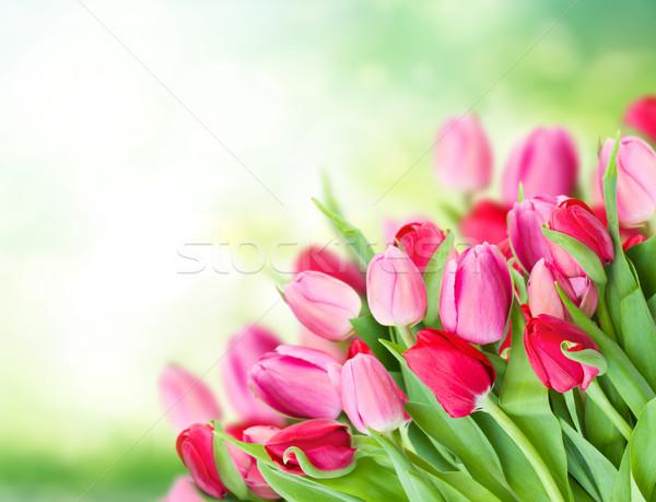 Photo stock: Tulipes · jardin · vert · espace · de · copie · Pâques · herbe