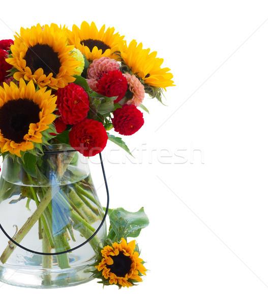 Dahlia zonnebloemen geïsoleerd witte bloemen oranje Stockfoto © neirfy