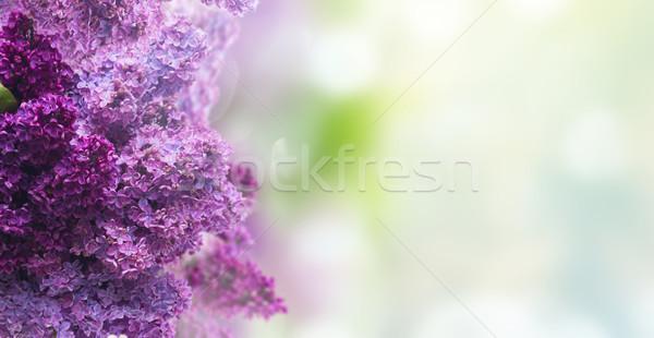сирень цветы зеленый границе саду баннер Сток-фото © neirfy
