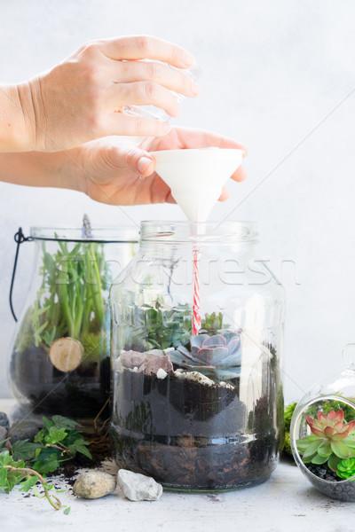 Ogród wewnątrz mason jar roślin Zdjęcia stock © neirfy