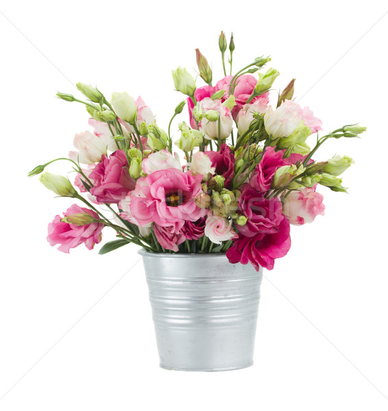 Pink eustoma flowers in  pot Stock photo © neirfy
