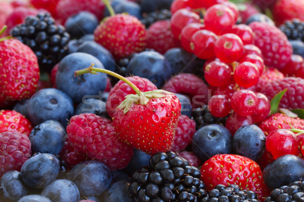 bluberry, raspberry, blackberry and red currrant Stock photo © neirfy
