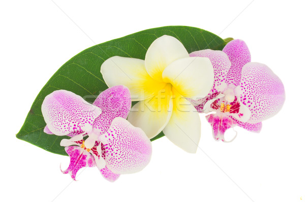 row of pink  orchid flowers Stock photo © neirfy