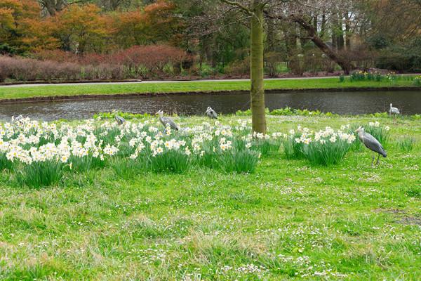 Clingendael park, Den Haag, Netherlands Stock photo © neirfy