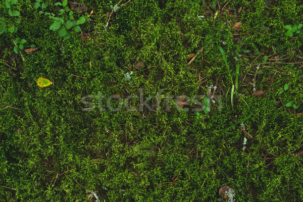 Greeen soft moss Stock photo © neirfy