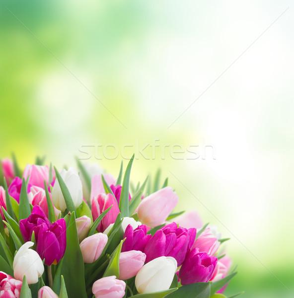 Ramo rosa púrpura blanco tulipanes Foto stock © neirfy