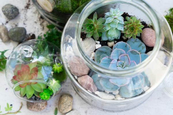 Kert bent kőműves bögre zöld növények Stock fotó © neirfy