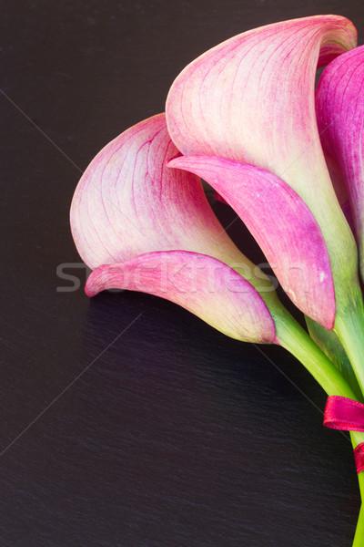 Calla lilly Stock photo © neirfy