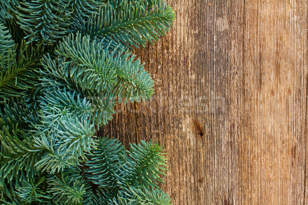 Christmas vers evergreen boom hout Stockfoto © neirfy
