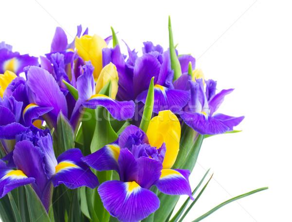 весны тюльпаны желтый синий цветы Сток-фото © neirfy