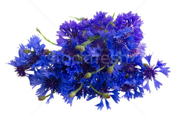 Blue cornflowers on white Stock photo © neirfy