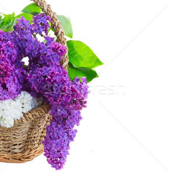 свежие сирень цветы корзины Сток-фото © neirfy