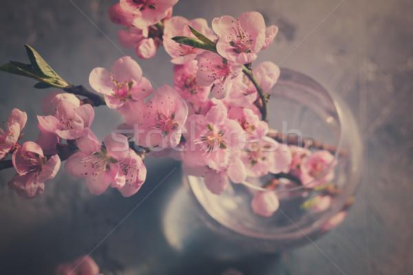 ピンク 桜 グレー レトロな 花 ストックフォト © neirfy