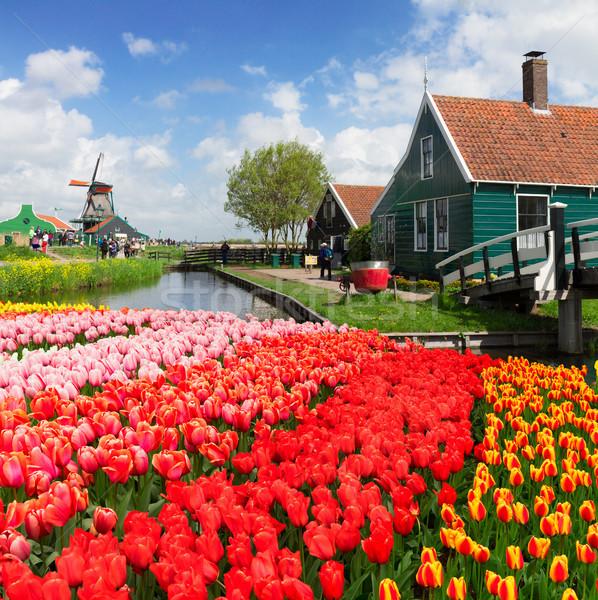 Alten Häuser Niederlande ländlichen Landschaft Stock foto © neirfy