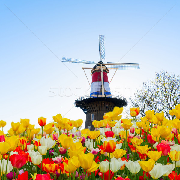 Nederlands wind landschap traditioneel windmolen Nederland Stockfoto © neirfy