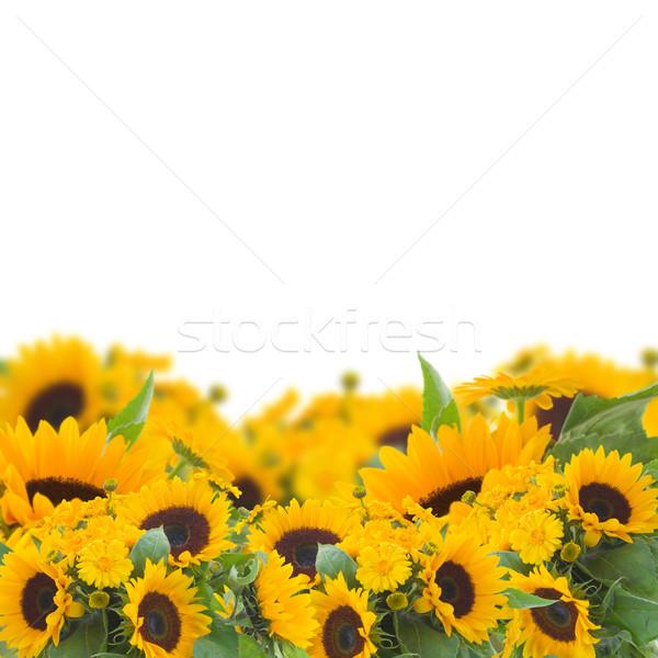 sunflowers and calendula flowers border Stock photo © neirfy