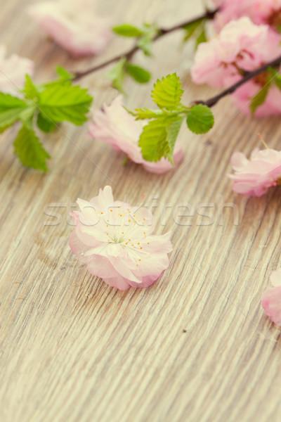 Rosa cereza flores frescos mesa de madera Foto stock © neirfy