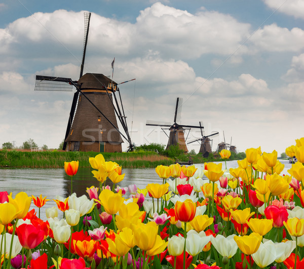 Foto stock: Holandés · molino · de · viento · tulipanes · campo · canal · flores