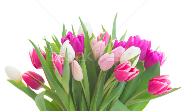 bouquet of  pink, purple and white  tulips Stock photo © neirfy