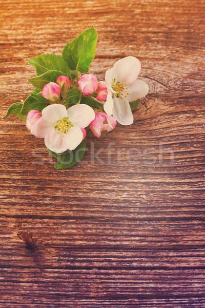 Almafa virág zöld levelek fából készült retro fa Stock fotó © neirfy