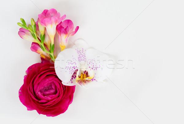 Stok fotoğraf: çiçekler · orkide · beyaz · üst · görmek · bo