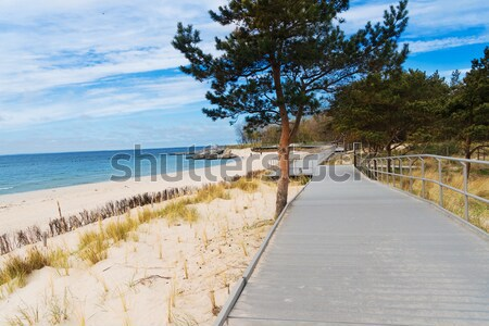 Baltic sea landscape Stock photo © neirfy