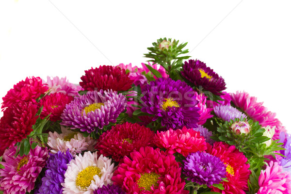 border of mixed aster flowers Stock photo © neirfy