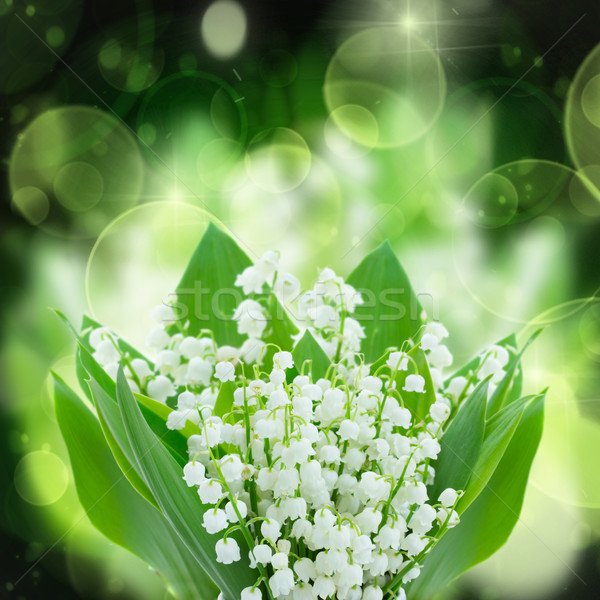 lilly of the valley flowers close up Stock photo © neirfy