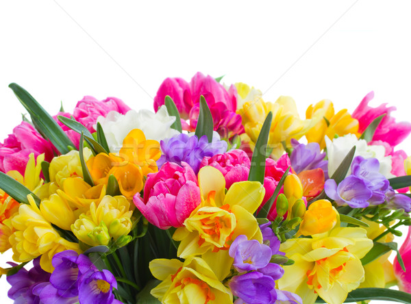 freesia and daffodil  flowers  border Stock photo © neirfy