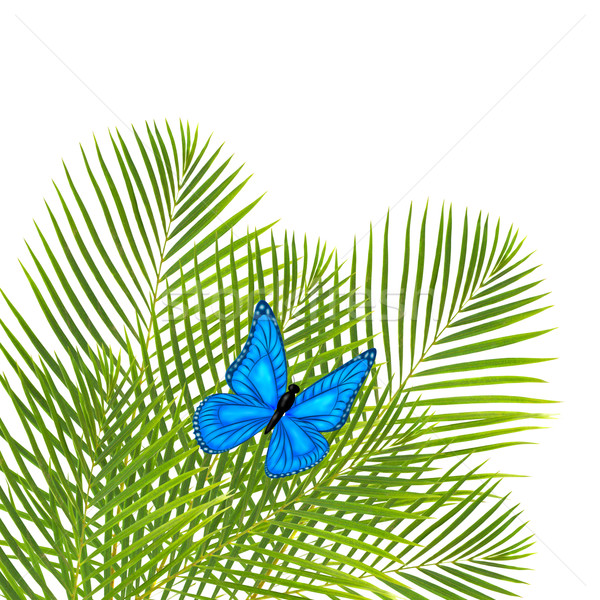 palm leaves with butterfly Stock photo © neirfy