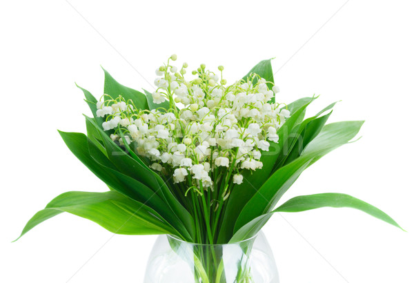 Bunch of Lilly of valley Stock photo © neirfy