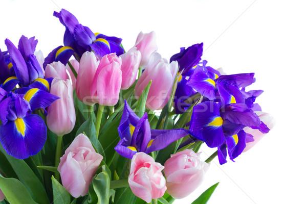 Blue irises and pik tulips Stock photo © neirfy
