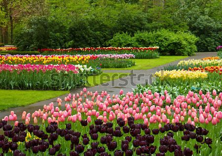 spring flowers in holland park Stock photo © neirfy