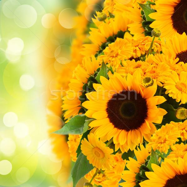 sunflowers anc marigold flowers border Stock photo © neirfy