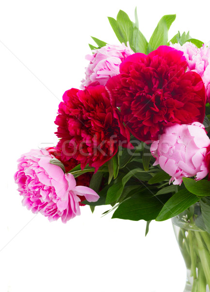 red and pink peonies Stock photo © neirfy