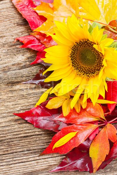 秋 ひまわり 新鮮な 黄色 ヒマワリ 葉 ストックフォト © neirfy