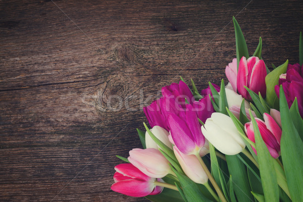 букет розовый Purple белый тюльпаны Сток-фото © neirfy