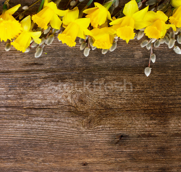 spring narcissus with catkins Stock photo © neirfy