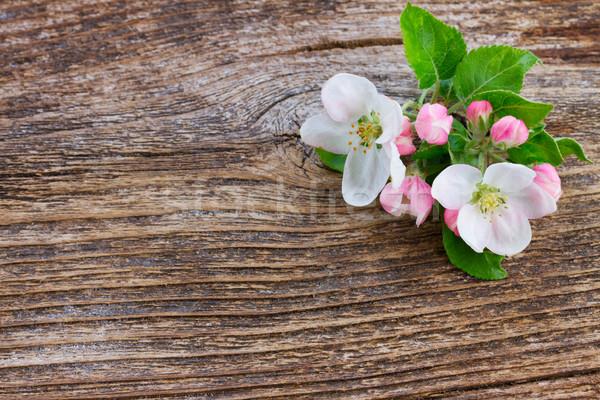 Elma ağacı çiçek yeşil yaprakları dal ahşap ağaç Stok fotoğraf © neirfy