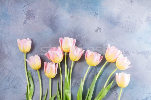 Rosa amarillo tulipanes gris piedra Foto stock © neirfy