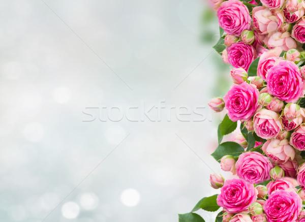 border of fresh pink roses close up Stock photo © neirfy
