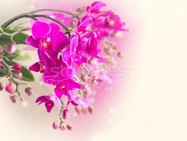 Viola orchidee bianco fiori primavera Foto d'archivio © neirfy