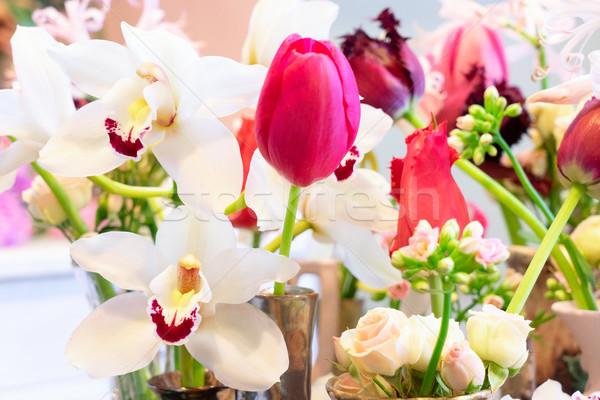Foto stock: Naturalismo · flores · rosa · flor · primavera · jardim