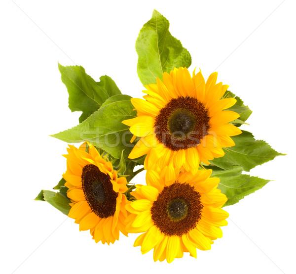 bight sunflowers bouquet Stock photo © neirfy