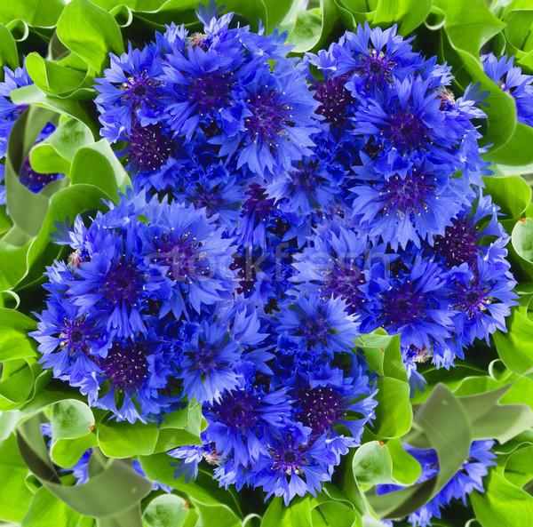 blue cornflowers background Stock photo © neirfy